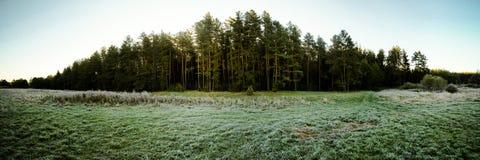 Un panorama d'un verger pendant le jour d'automne Photographie stock