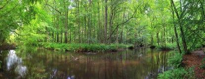 Un panorama d'une forêt sauvage et d'un lac en Europe Images stock