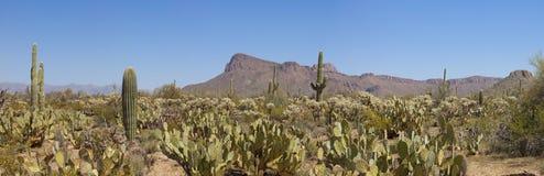 un panorama di 180 gradi del parco nazionale del saguaro Immagini Stock