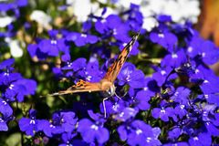 Un papillon Photographie stock