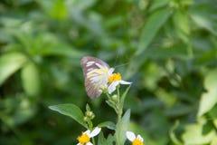 Un papillon Photo libre de droits