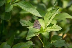 Un papillon Photos libres de droits