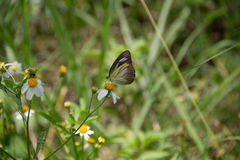 Un papillon Image stock