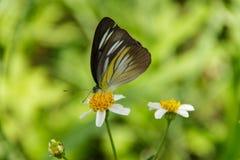 Un papillon Photos stock