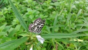 Un papillon attend la mouche loin Photos stock