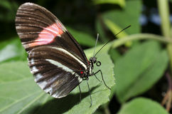 Un papillon de facteur Image libre de droits