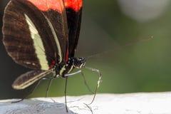 Un papillon noir et rouge sur une pierre photo libre de droits