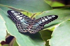 Un papillon noir sur les plantes vertes Photo libre de droits