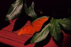 Un papillon orange photos stock