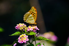 Un papillon orange se reposant sur une fleur au soleil, avec un fond foncé Photos libres de droits