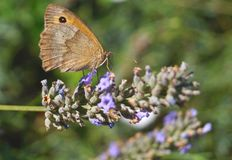 Un papillon sur la fleur Photographie stock