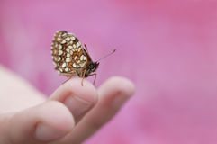 Un papillon sur une astuce de doigt image stock