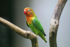 Un pappagallo Fotografia Stock Libera da Diritti