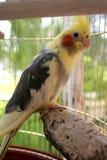 Un pappagallo Fotografie Stock