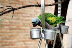 Un pappagallo Immagini Stock