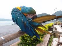Un pappagallo Immagine Stock Libera da Diritti