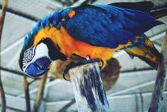 Un pappagallo Fotografia Stock