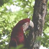 Un pappagallo blu e giallo del mackaw Fotografia Stock