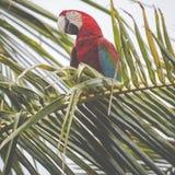 Un pappagallo blu e giallo del mackaw Immagini Stock