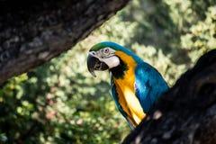 Un pappagallo variopinto immagini stock