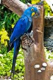 Un pappagallo variopinto Fotografia Stock