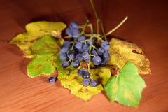 Un paquete de vino de la uva imágenes de archivo libres de regalías