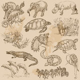 Un paquete dibujado mano del vector - ANIMALES Fotografía de archivo