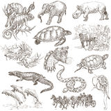 Un paquete dibujado mano, línea arte - animales Imágenes de archivo libres de regalías