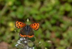 Un par de alas simétricas Fotografía de archivo