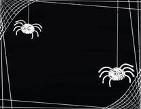 Un par de arañas lindas que hacen girar una frontera del web Foto de archivo libre de regalías