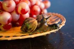 Un par de caracoles en una placa de mimbre con las uvas rojas fotografía de archivo libre de regalías