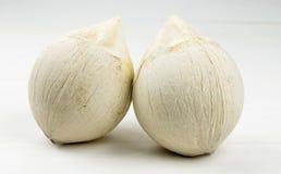 Un par de coco joven en el fondo blanco Fotografía de archivo libre de regalías