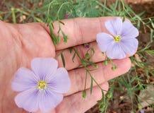 un par de flores delicadas en el jardín fotografía de archivo