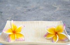 Un par de frangipani imagenes de archivo