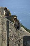 Un par de mono que se sienta en una cerca de piedra Fotografía de archivo
