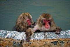 Un par de monos en las aguas termales fotos de archivo