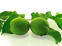Un par de nueces inmaduras verdes. Fotografía de archivo libre de regalías