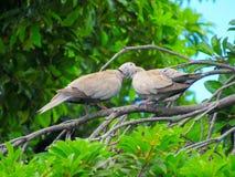 Un par de pájaros románticos en un árbol imágenes de archivo libres de regalías