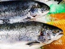 Un par de pescados de color salmón frescos en el hielo - cierre encima de la visión, desde arriba fotos de archivo libres de regalías