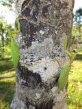 Un par de predicadores de rogación en un árbol Fotos de archivo