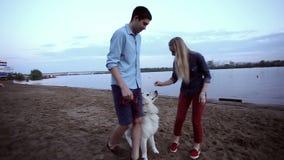 Un par joven camina a lo largo de la playa con un perro almacen de video