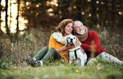 Un par mayor con un perro en una naturaleza del otoño en la puesta del sol foto de archivo libre de regalías