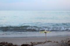 Un parapluie d'un cocktail dans le sable sur la plage dans la perspective des vagues de mer photographie stock