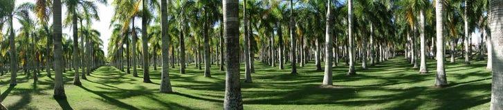 Un parc avec beaucoup de paumes dans Dominicana photo libre de droits