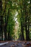 un parc de ville dans l'automne tôt Images stock
