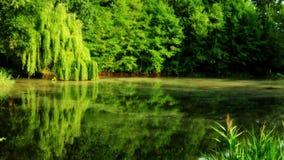 Un parc vert avec un étang au milieu image libre de droits