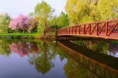 Un parco con il ponte rosso e l'albero rosa del fiore Fotografie Stock Libere da Diritti