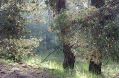 Un parco della passeggiata in primavera fotografia stock libera da diritti