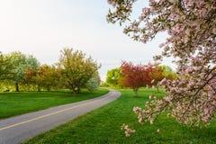Un parco in primavera Fotografie Stock Libere da Diritti