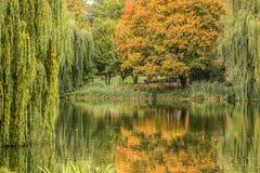 Un parque del otoño con el lago Imagenes de archivo